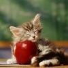 Atpratinti kačiuką nuo laipiojimo ant stalo