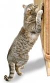 Atpratinkit kačiuką nuo sienų drąskymo